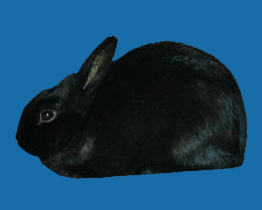 Rabbit Photos